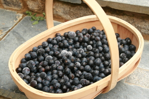 Basket of damson
